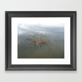 Escaped Cranberries Framed Art Print
