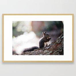 Cute eurasian red squirrel Framed Art Print
