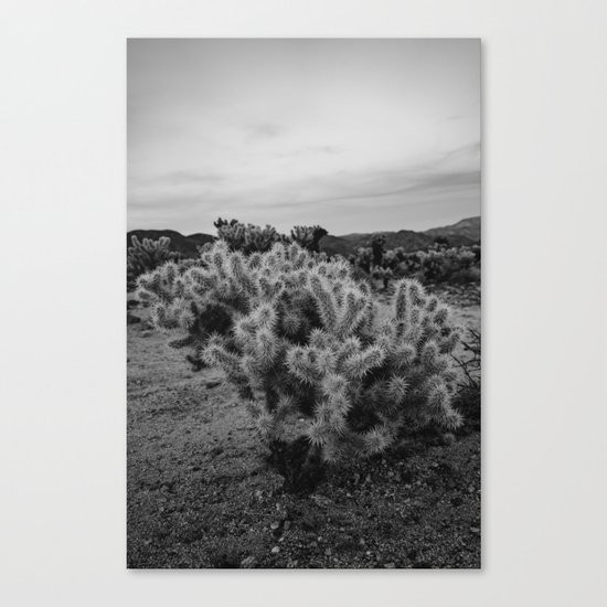 Cholla Cactus Garden IX Canvas Print