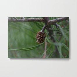 The Budding Pine Metal Print