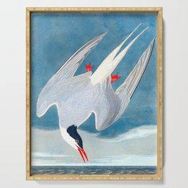 Arctic Tern James Audubon Vintage Scientific Illustration American Birds Serving Tray