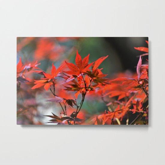 Scarlet Japanese Maple Leaves Metal Print