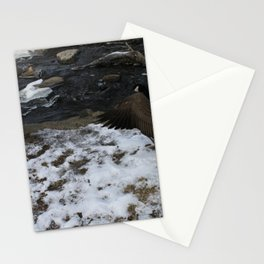beautiful Goose showing off. Stationery Cards