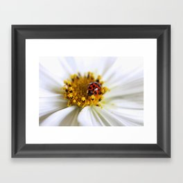 Lady Bug and her Cosmo Framed Art Print