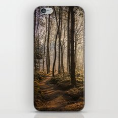 Forest in the Sun iPhone & iPod Skin