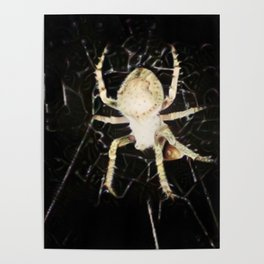 Mid-air Spider Poster