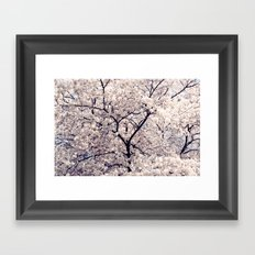 Cherry Blossom * Framed Art Print