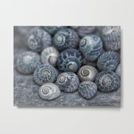 Beach Treasures Snail Shell Collection Metal Print