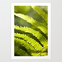 part of the broad fern leaf Art Print