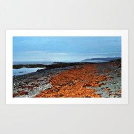 Seaweed Beach Art Print