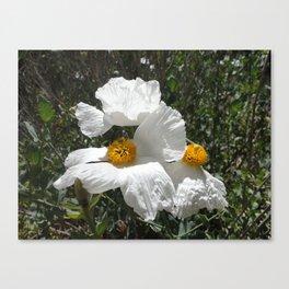Matilija Poppy Canvas Print
