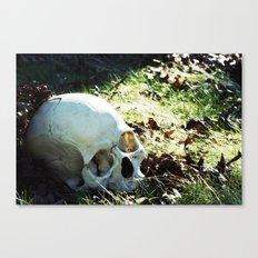 More Skulls Please Canvas Print