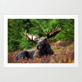 Relax Moose Art Print
