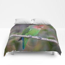 Birds of Namibia 6 Comforters