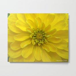 Bright Yellow Zinnia Flower Metal Print