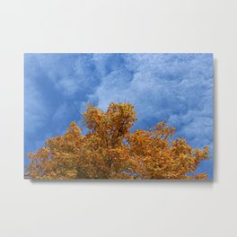 Autumn Tree Bottom Third of Photo Metal Print