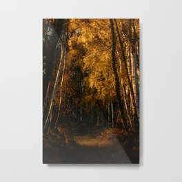 Harsh Autumn Light at Holme Fen Metal Print