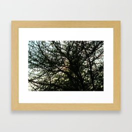 Pollock's Tree Framed Art Print
