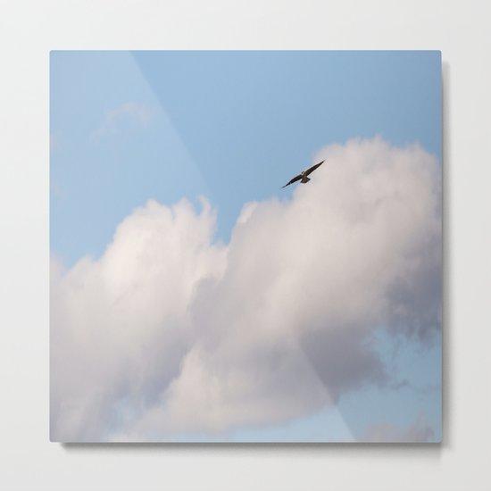 Osprey in Sky Metal Print