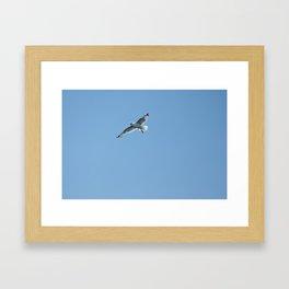 Seagull in Croatia #2 Framed Art Print