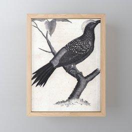 042 Ferruginous Woodpecker8 Framed Mini Art Print