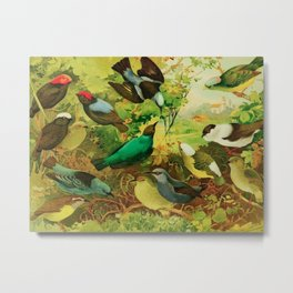 Amazonian birds by Göldi & Emil August, 1859-1917 Belem Brazil Colorful Tropical Birds Illustration Metal Print