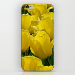 Field of Yellow Tulips iPhone Skin