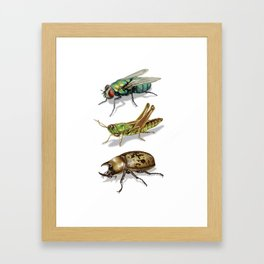3 Insect Poster Framed Art Print
