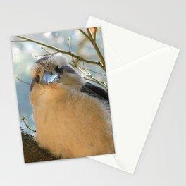 Cute Kookaburra Stationery Cards