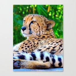 Cheetah Acinonyx Jubatus Wild Cat Canvas Print