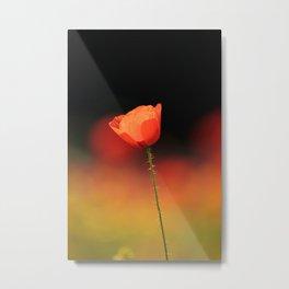 Red Poppies Metal Print