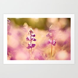 Let the sun soak in Art Print