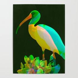 Deep green Ibis Poster