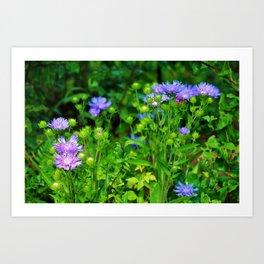 Lavender Blue Flowers Art Print