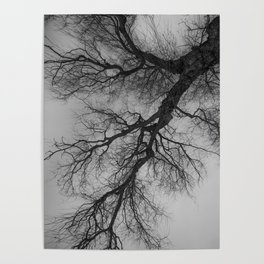 Lungs of the Earth   Nature Photography   Weeping Willow   Black and White   black-and-white   bw Poster