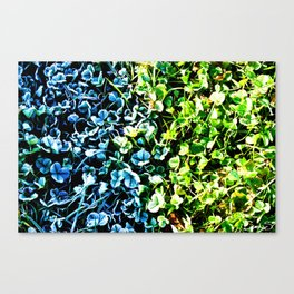 Hot or cold Canvas Print