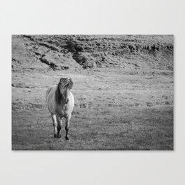 Icelandic Horse on a Pasture Canvas Print