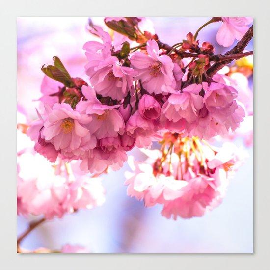 Pink Japanese Cherry Blossom, Sakura Canvas Print