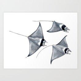 Devil fish Manta ray Mobula mobular Art Print
