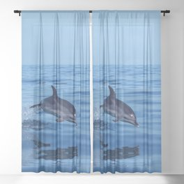 Spotted dolphin jumping in the Atlantic ocean Sheer Curtain