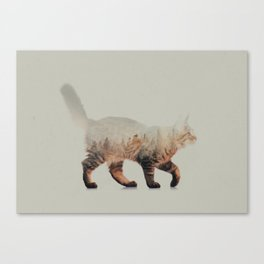 Cat: Maine Coon Canvas Print