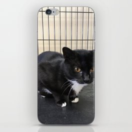 Adoptable Tuxedo Black & White Dutchess Cat iPhone Skin