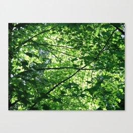 Green No.1 Canvas Print