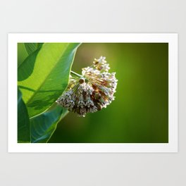 Out of the Green, in Bloom Art Print