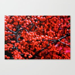 Festive Berries 1 Canvas Print