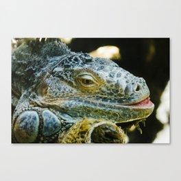 Iguana in Ueno Zoo Canvas Print
