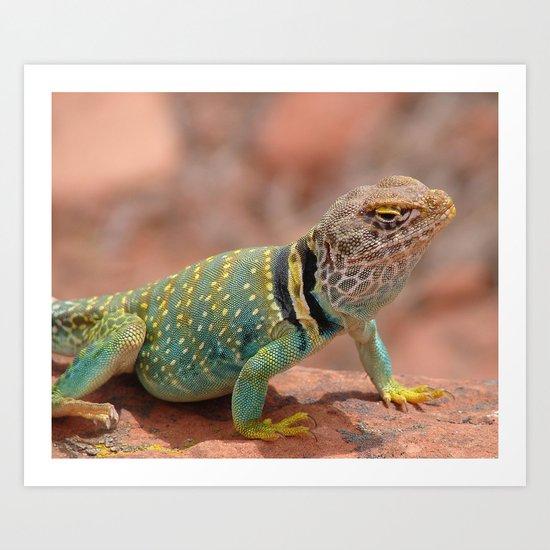 Eastern Collard Lizard Art Print