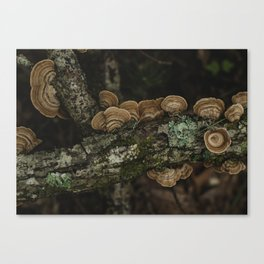 Thoughtful and Deep - Mushrooms in Forest I Canvas Print