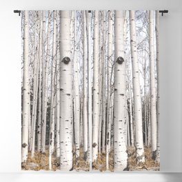 Trees of Reason - Birch Forest Blackout Curtain