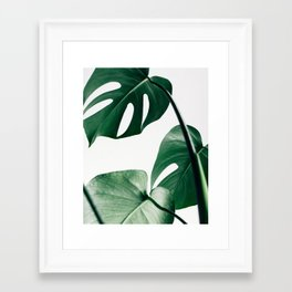 Plant, Green, Monstera, Leaf, Minimal, Trendy decor, Interior, Wall art, Photo Framed Art Print